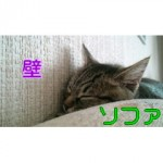 SN3S0179_2.jpg
